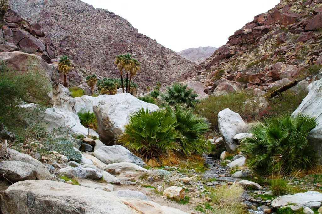 Palm Canyon Oasis