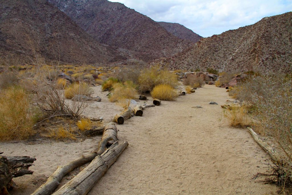 Anza-Borrego Palm Canyon Trail
