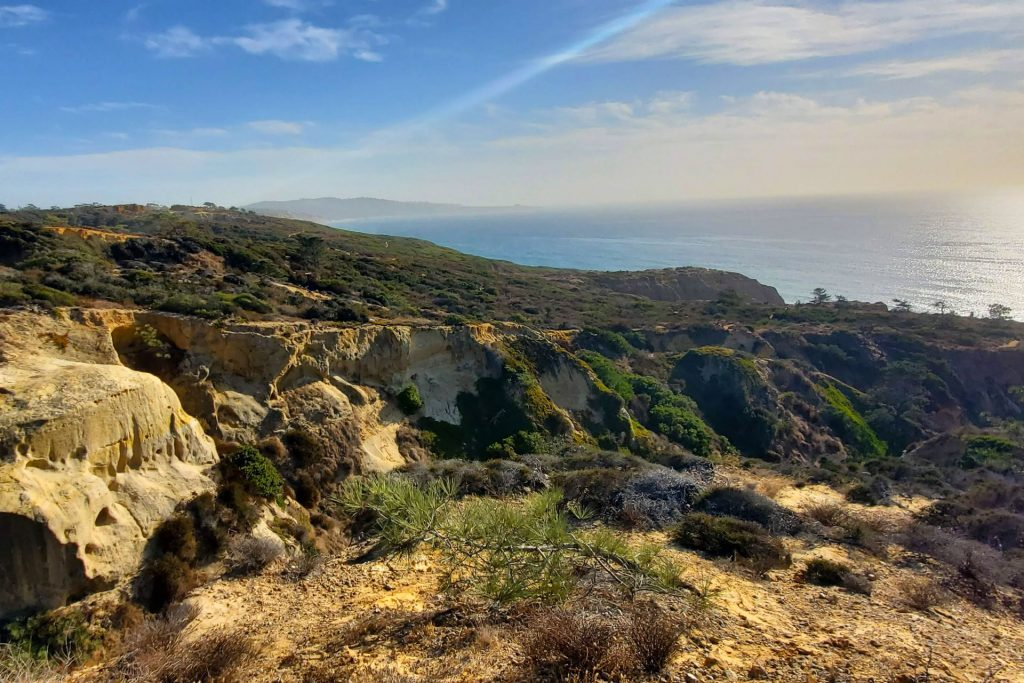 Torrey Pines Parry Grove Trail View