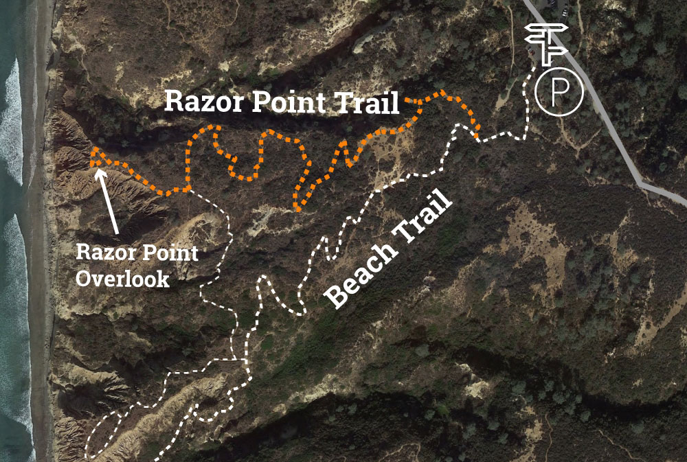 Torrey Pines Razor Point Trail Map